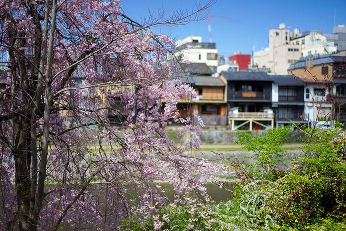 0407京都4月-3