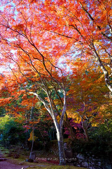 そうだ京都いこう20192019-92
