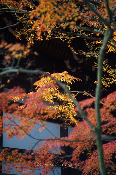 京都112511月-28