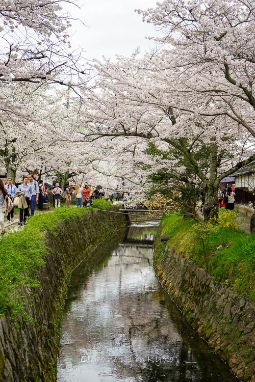 0407京都4月-81