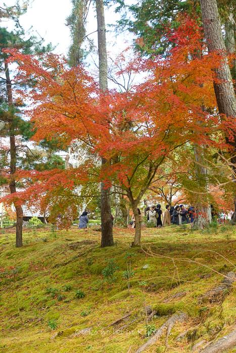 京都1125_RX100朝11月-5
