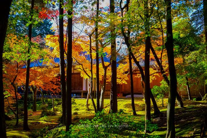 1102苔寺11月-25
