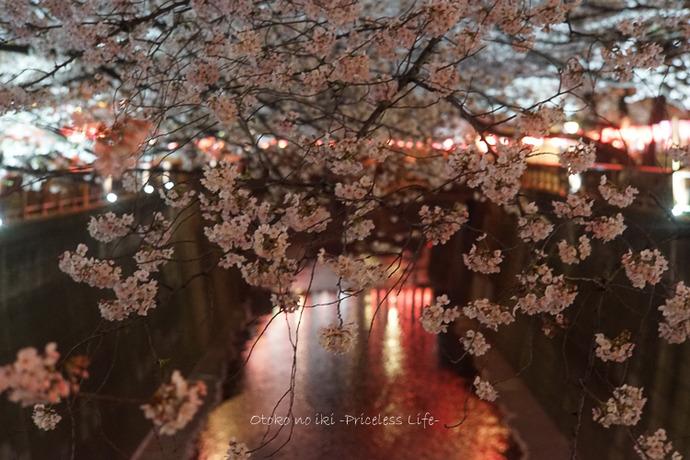 花見目黒川2019-5