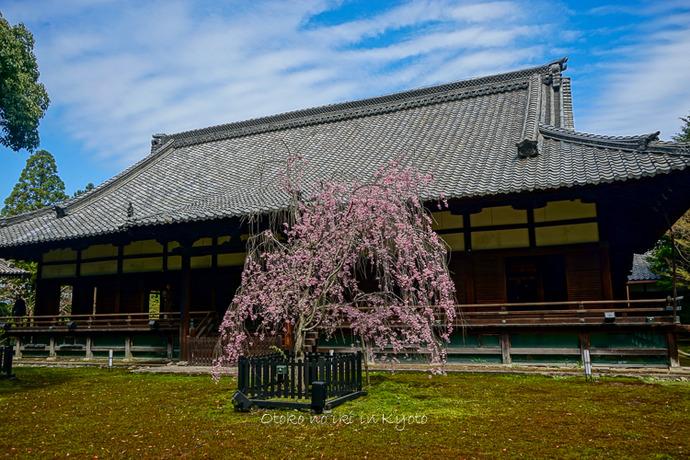 0407京都4月-45