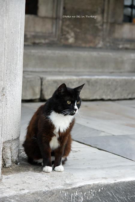 0223-1猫トルコ