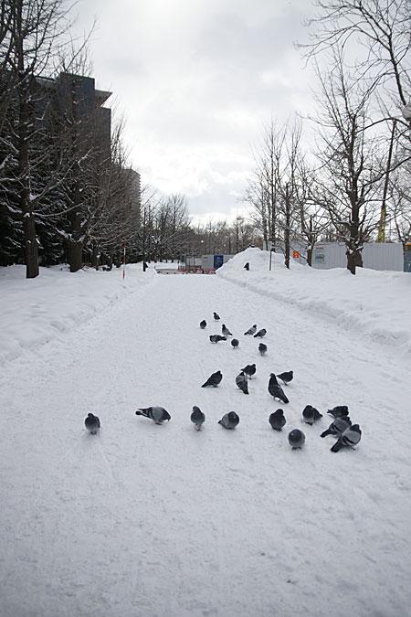 0525-2雪と鳩