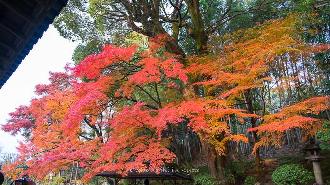 0602京都11月-11