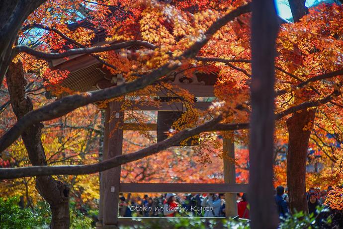 1124京都11月-12