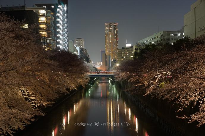 0330桜43月-7