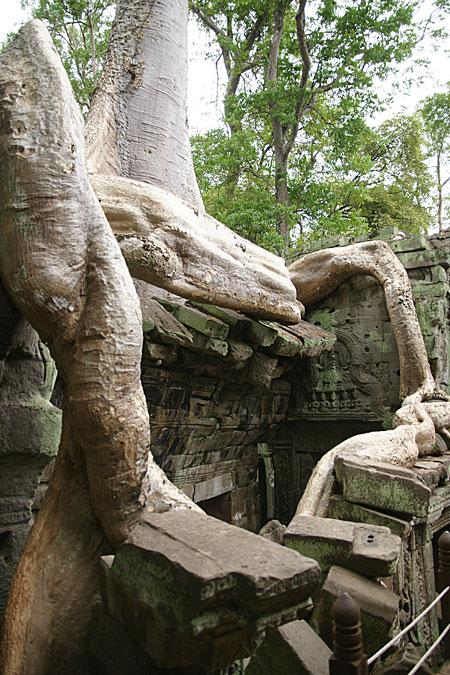 0724-10木の力