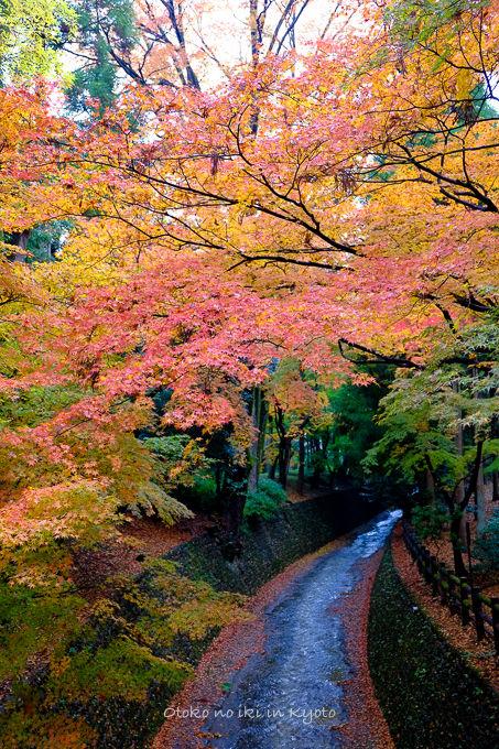 11月京都2012北野天満宮-18