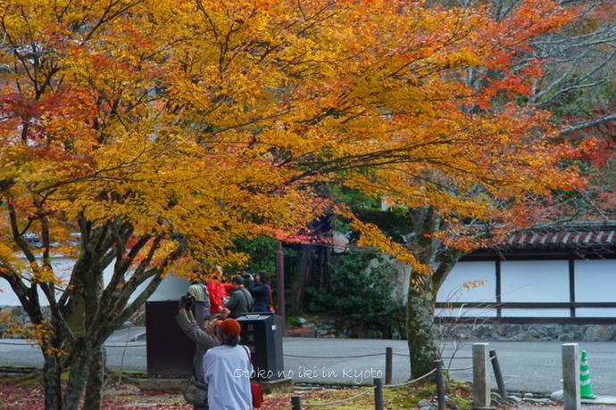 京都1125朝11月-6