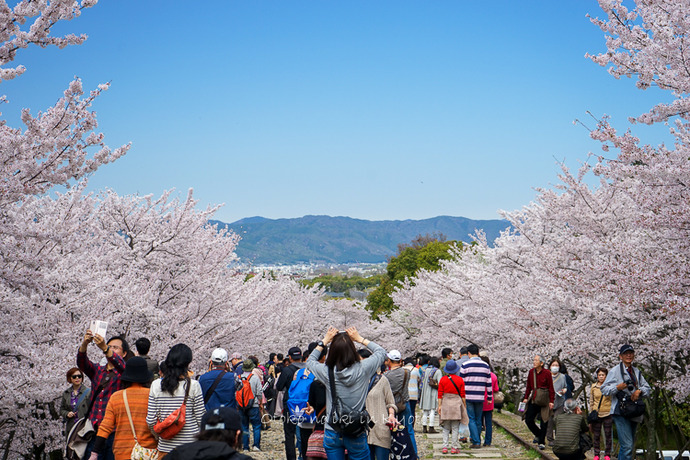 0407京都4月-49