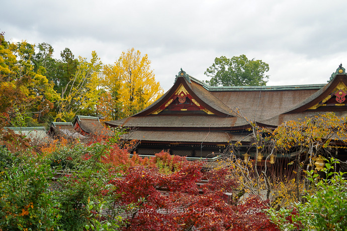 そうだ京都いこう20192019-224