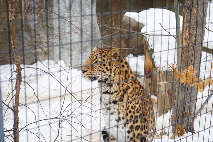 旭山動物園2017-34