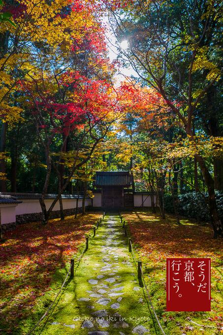 1128京都-0