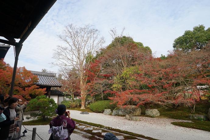 1108京都11月-23