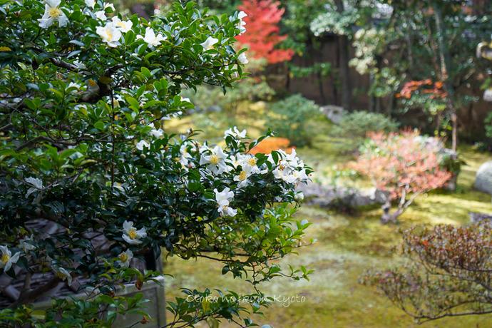 そうだ京都いこう20192019-168
