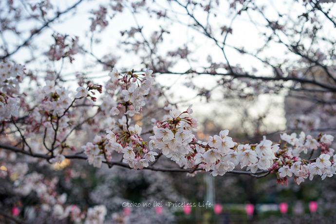 0330桜23月-47
