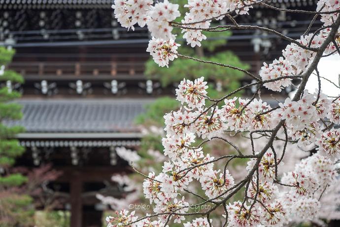 0407京都4月-100