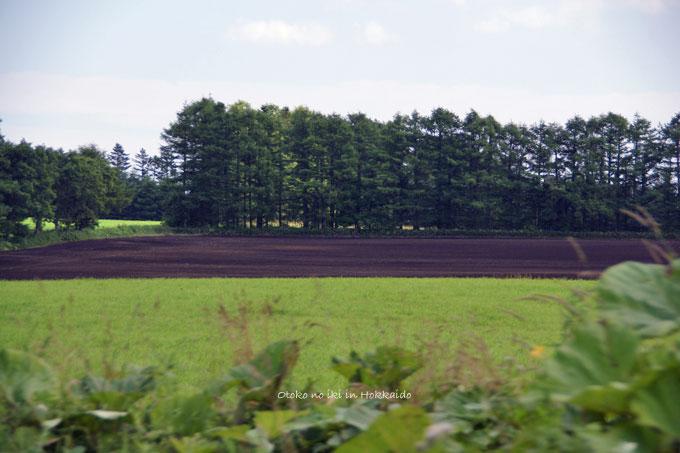 1126-10畑と牧草