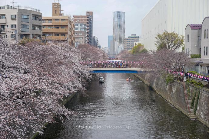 桜2019-12