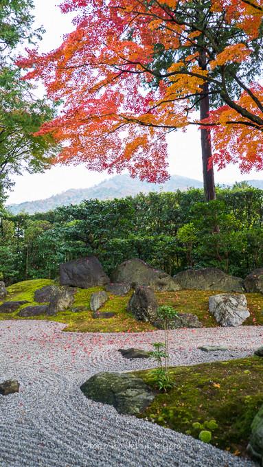 0404京都紅葉11月-16