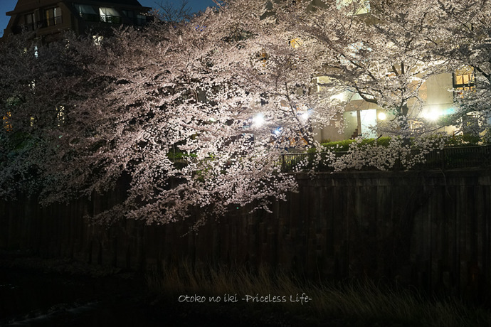 0330桜43月-4