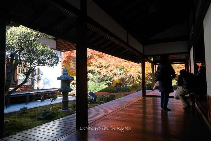 1124京都11月-2