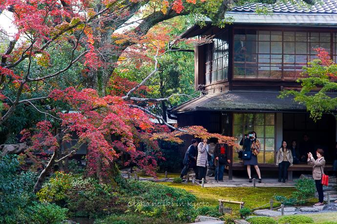 1108京都11月-13