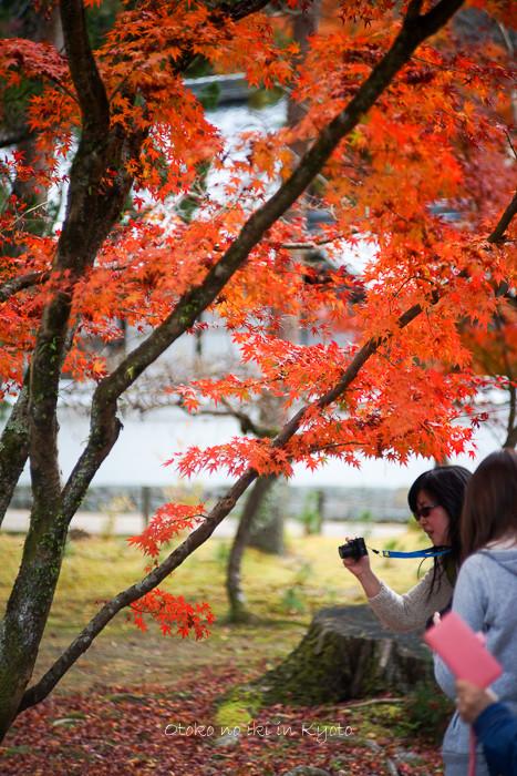 京都1125朝11月-13