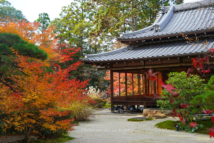 1124京都11月-25