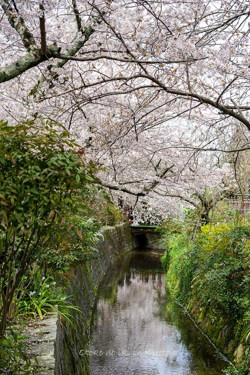 0407京都4月-73