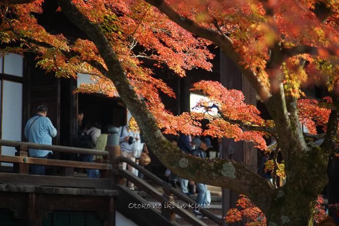 1108京都11月-46