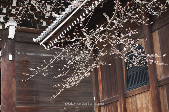 0324京都3月-21