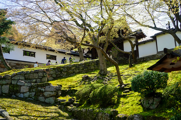 0407京都4月-34