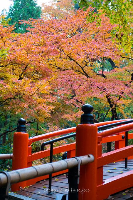 11月京都2012北野天満宮-20