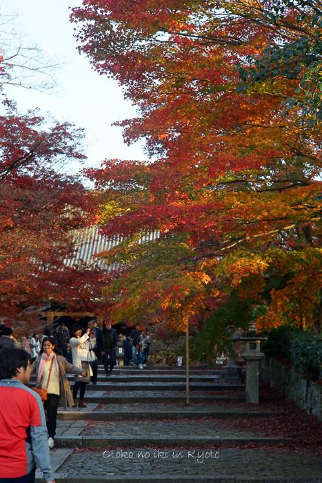 京都112511月-16