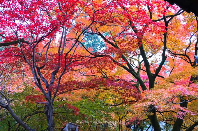 0404京都紅葉11月-20