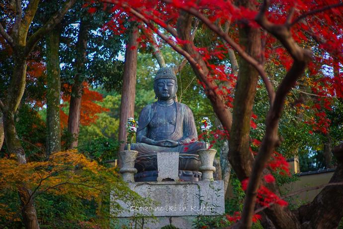 京都112511月-12