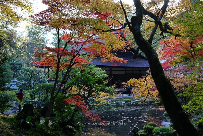 1123京都11月-26
