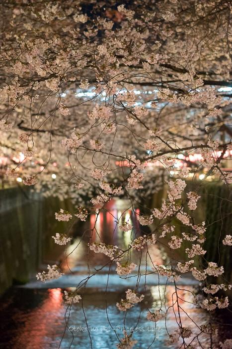0330桜3月-2
