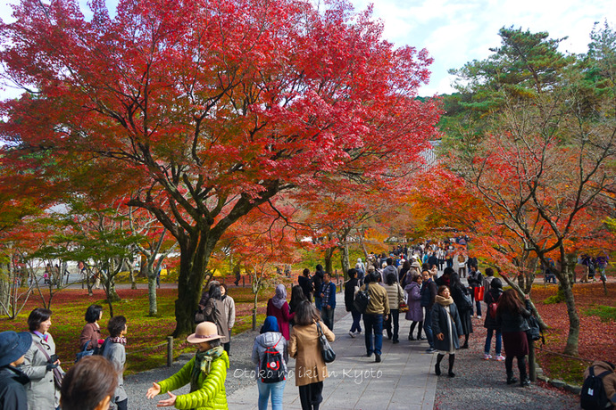 京都1125朝11月-4