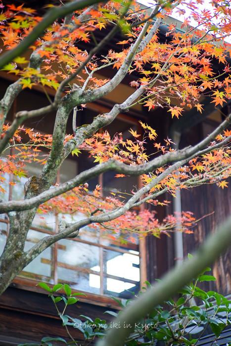 1108京都11月-10