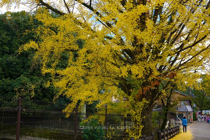 1112京都11月-6