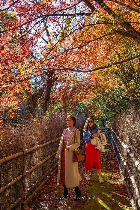 そうだ京都いこう20192019-39