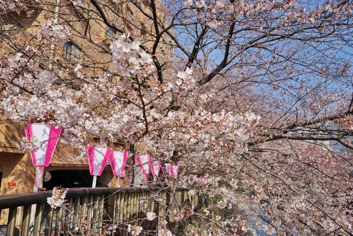 0401桜2