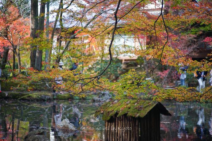 1108京都11月-28