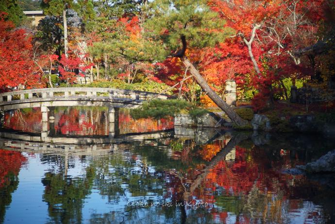 1124京都11月-18
