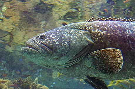 美ら海 魚1
